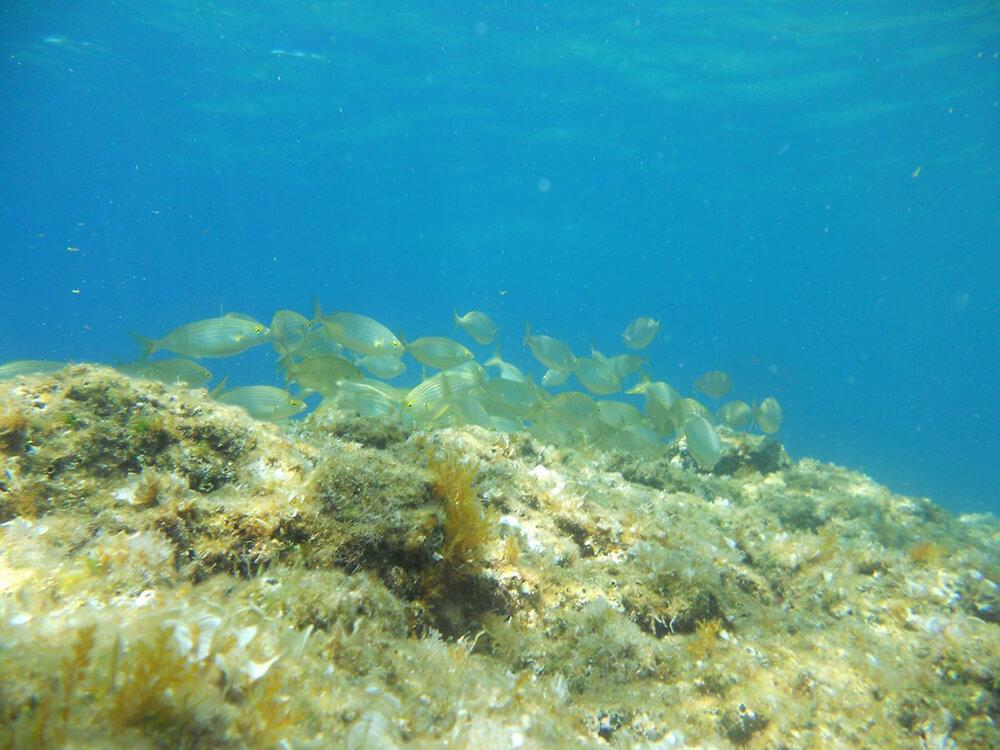 Cava Grado Sant'angelo snorkeling